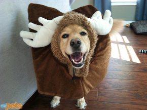 Halloween e i costumi per animali. Non c'è limite alpeggio