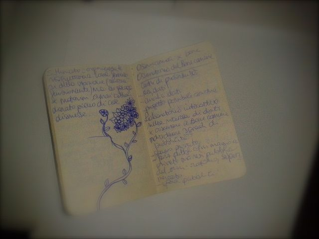moleskine cahier
