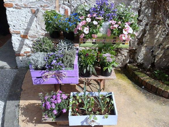 Fior di citt pisa in fiore piante fiori novit dal for Piante da aiuola