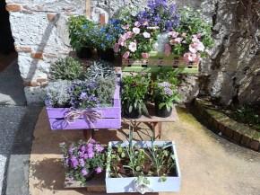 Fior di città Pisa in fiore: piante, fiori, novità dal mondogreen